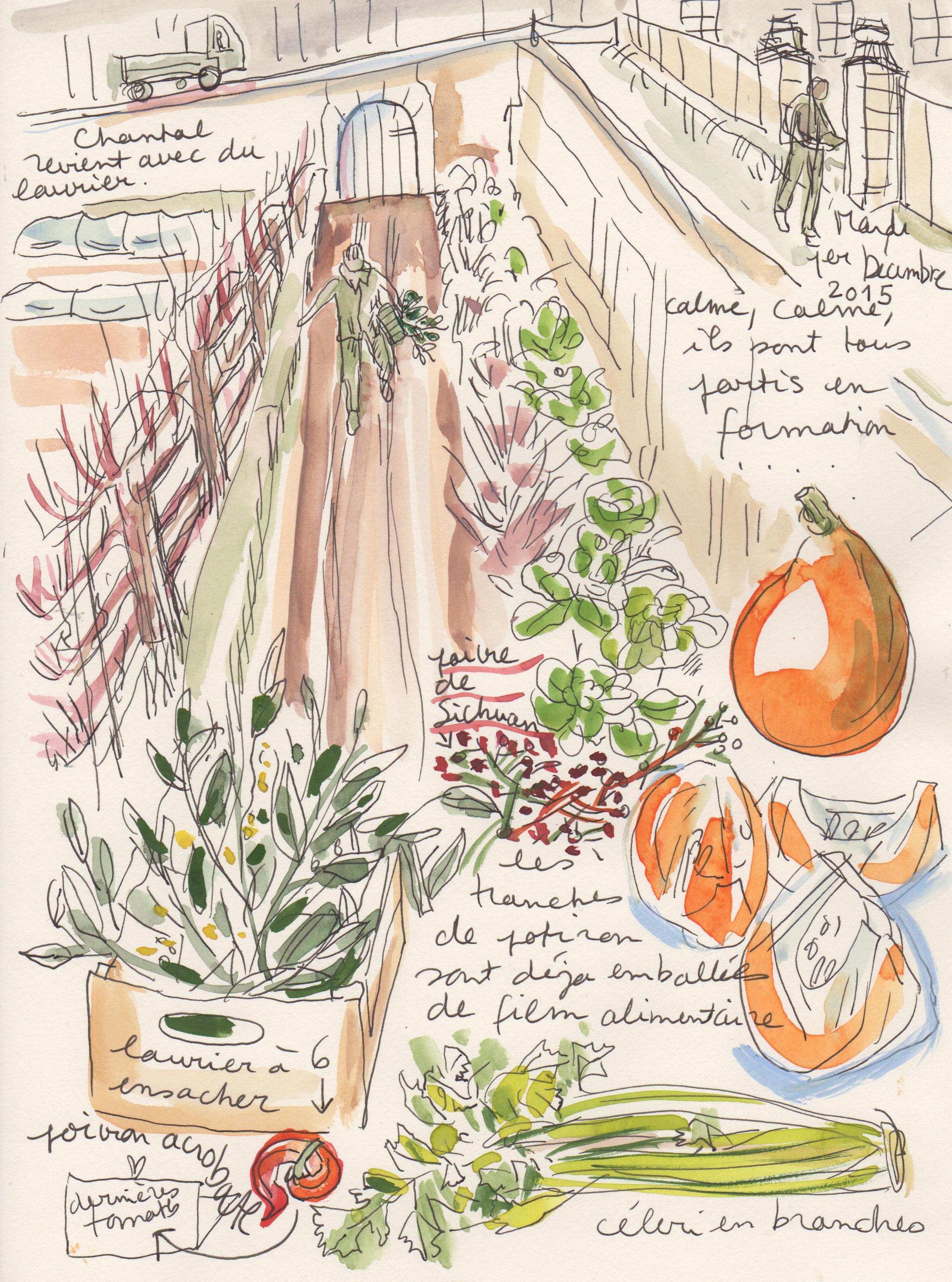 the royal vegetable garden sketchbook rapha le bernard bacot. Black Bedroom Furniture Sets. Home Design Ideas