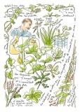 jardiniers_des_villes-44-ali