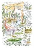 jardiniers_des_villes-81-catherine